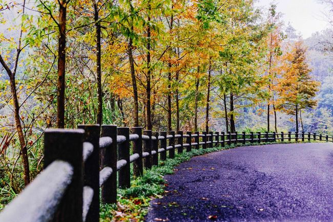 Autumn road My Traveling Photography From My Point Of View My Street Photography Taking Photos Tree Trunk Tree Season  Autumn Beauty In Nature Empty Empty Road Peace Peace And Quiet Road Exceptional Photographs No People Scenics Non-urban Scene