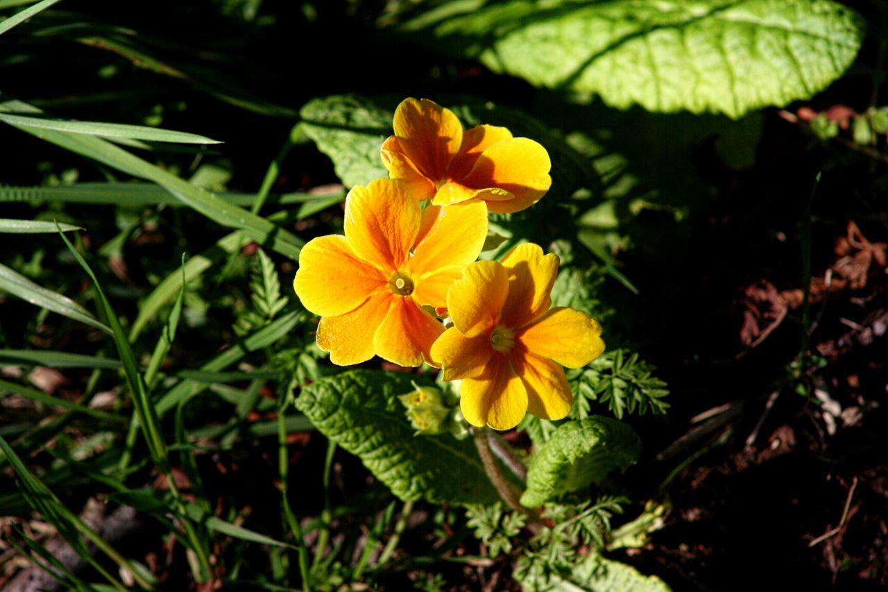 Yellow Flowers Blooming In Sunlight