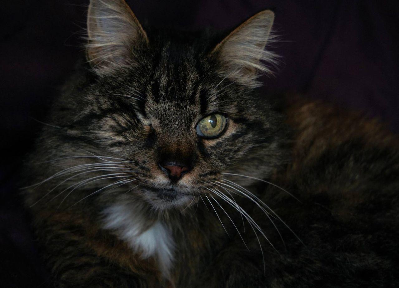 Close-Up Portrait Of Cat Winking
