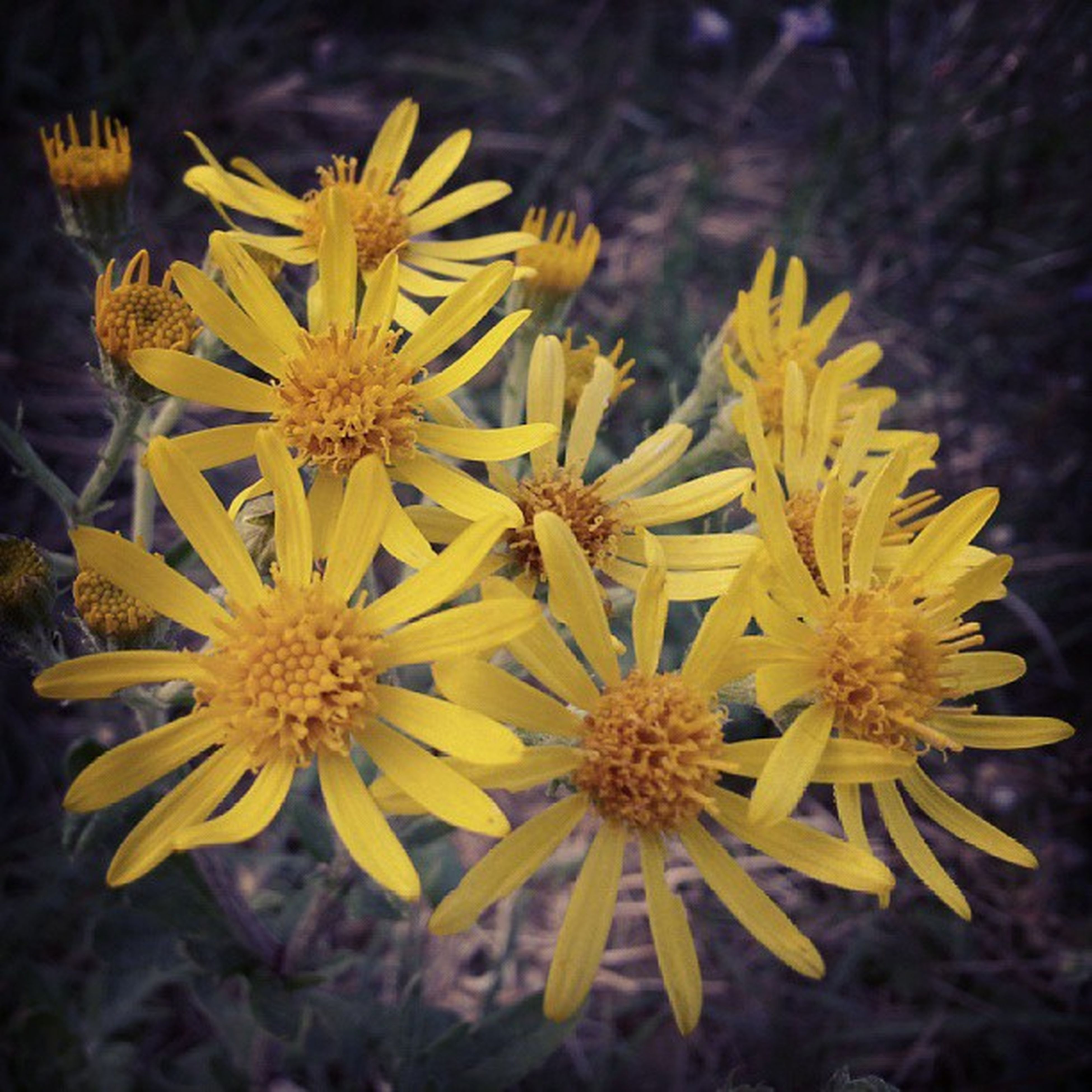 flower, yellow, petal, freshness, fragility, flower head, growth, beauty in nature, focus on foreground, close-up, nature, blooming, plant, pollen, in bloom, selective focus, day, outdoors, no people, high angle view