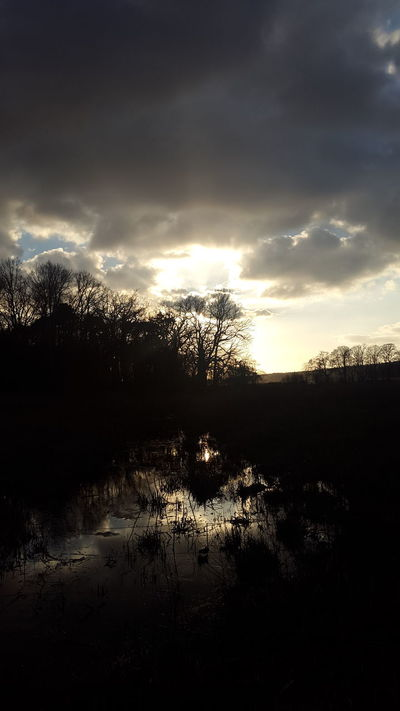 Reflection Sunbeam Beauty In Nature Woods Sunset Mystery Myterious Mystical Atmosphere