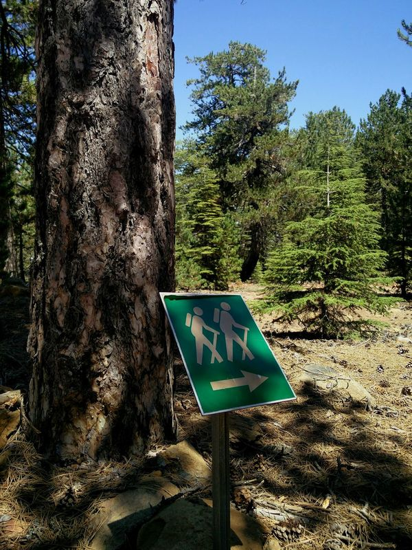 Sign in the Forest on Trail Running and Hiking Trail in Troodos Mountains on Cyprus 🇨🇾 Mix Your World ✌️ Forest Photography Forestwalk Forest Path Tree TreePorn Two Is Better Than One EyeEm Best Shots - Nature EyeEm Nature Lover Hikingadventures Hiking Trail Outdoor Photography Nature Photography Travel Destinations Camping Going The Distance On The Way The Great Outdoors - 2017 EyeEm Awards