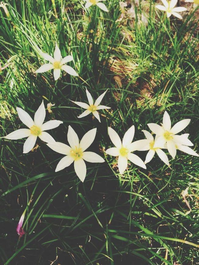 My Little Cuties My Flowers My Life
