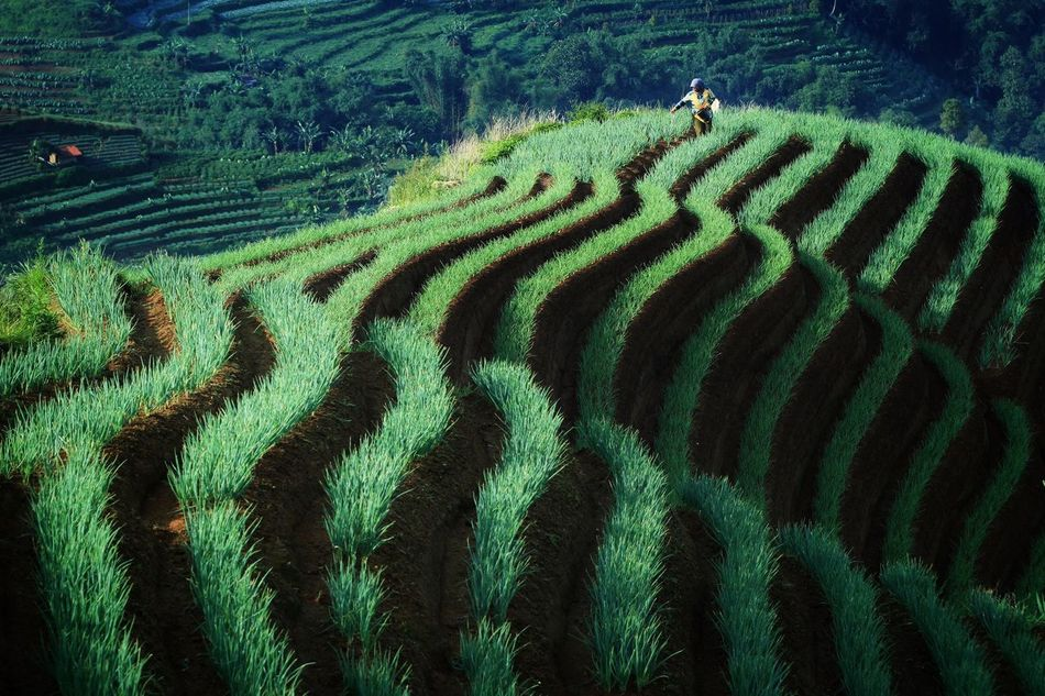 The KIOMI Collection the nature curves Majalengka Argapura INDONESIA Miles Away