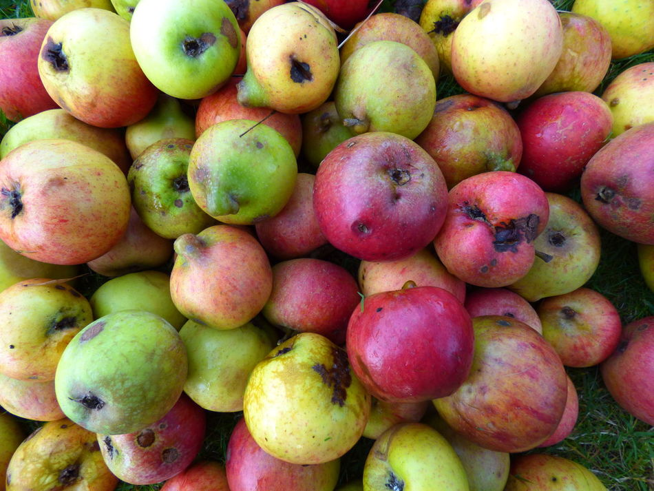 Apple Apples Autumn Autumn Fruits Beautifully Organized Close-up Food Fruit Outdoors