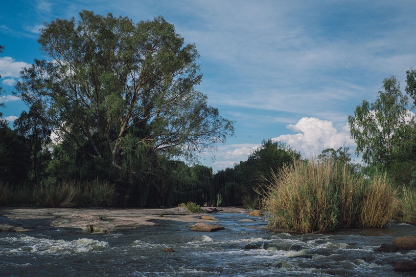 Nature Nature Photography Sunlight Trees Day Nature_collection Outdoor Photography Outdoors River Sky Stream Summer Trees And Sky