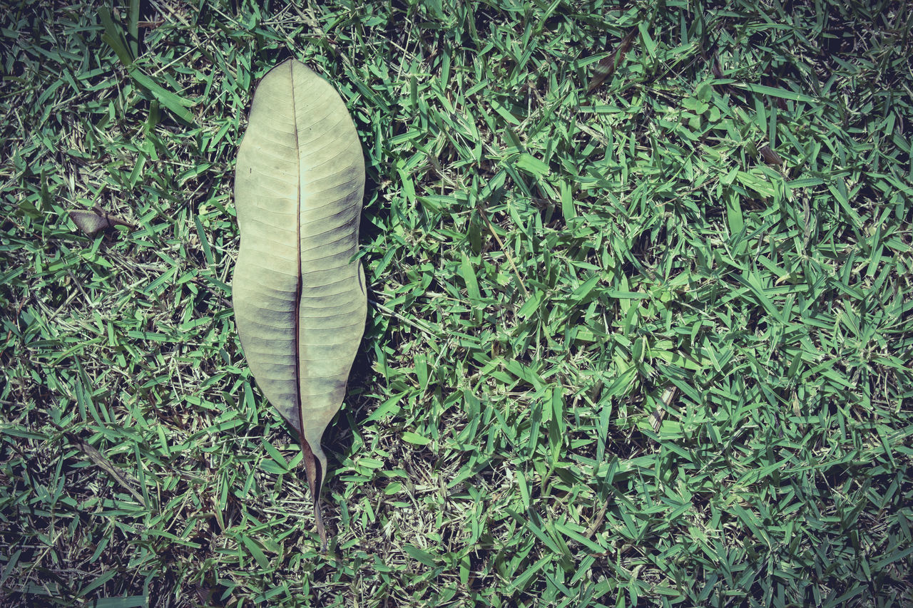 Directly Above Shot Of Leaf On Grassy Field
