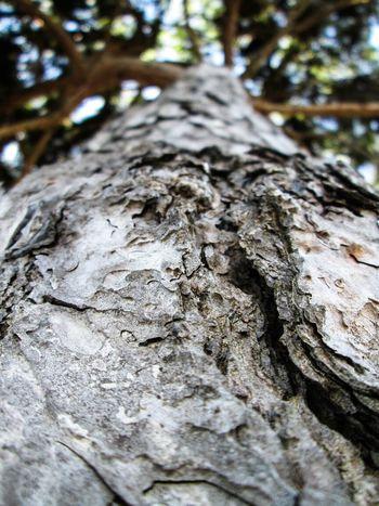 Below the tree TreePorn Nature_collection EyeEm Nature Lover EyeEm Best Shots