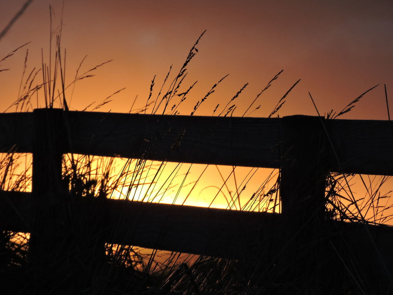 Beauty In Nature Beauty In Ordinary Things Grass Growing Out Of Wooden Slats Nature Orange Color Outdoors Rural Scenes Sky Sunrise_Collection