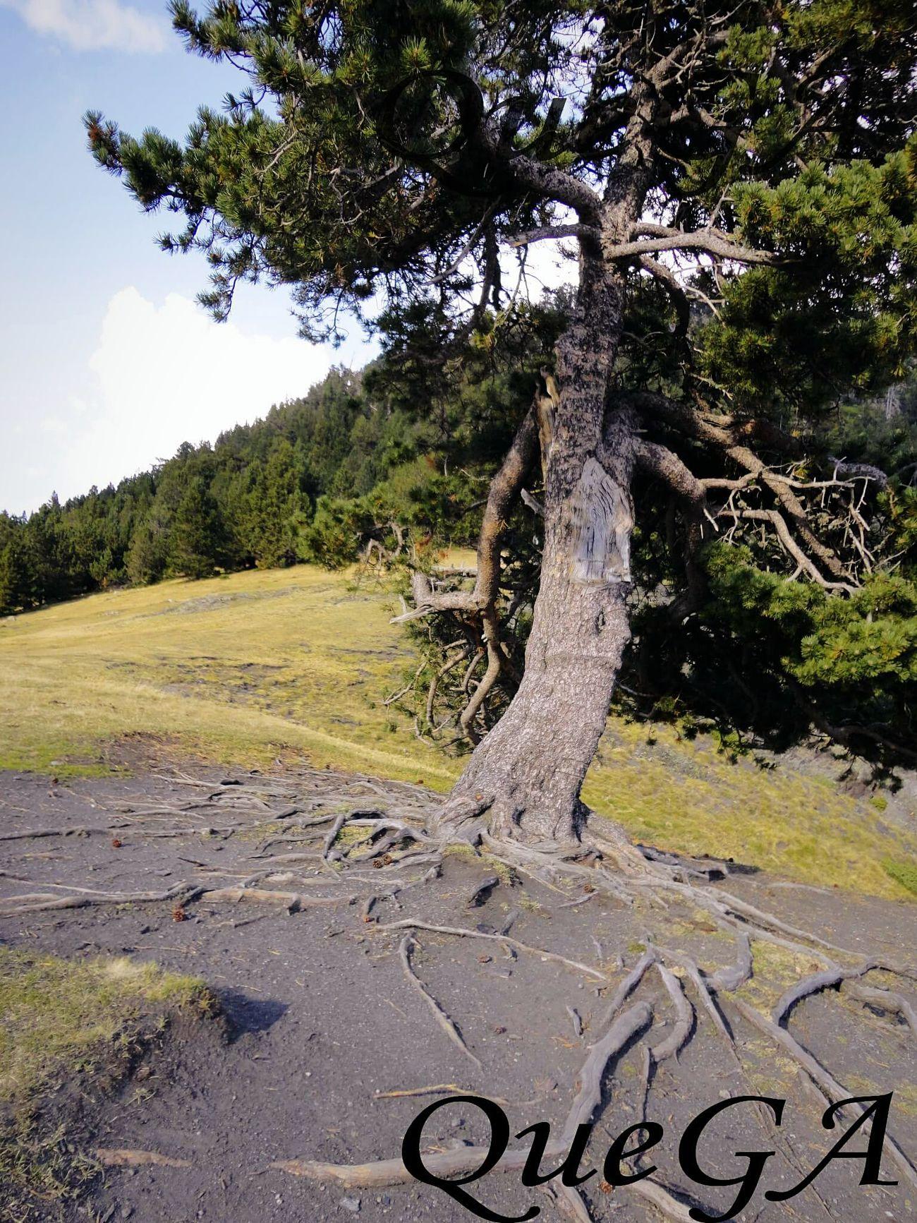 Pueden ser grandes o mas grandes, pero siempre estaran nuestras raices. Raíces Roots Nature_collection Naturaleza Trees árbol Paisajes EyeEm Nature Lover No Edit/no Filter Relaxing