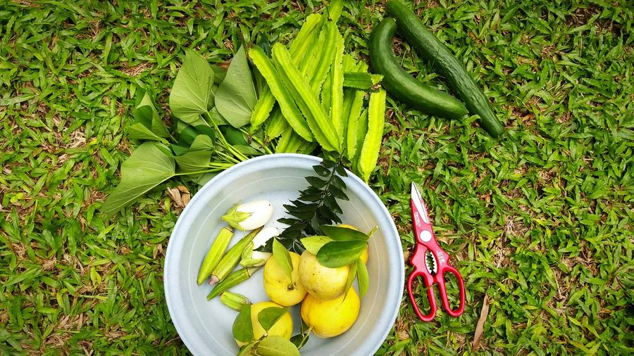 My garden harvest , Vege from mini garden Vegetable Vegetables Photo Ediblegarden Lemons Lemon From My Garden Cucumbers Angled Beans Sweet Potato Leaves High Angle View Green Color Grass Healthy Eating Fruit Food And Drink Directly Above