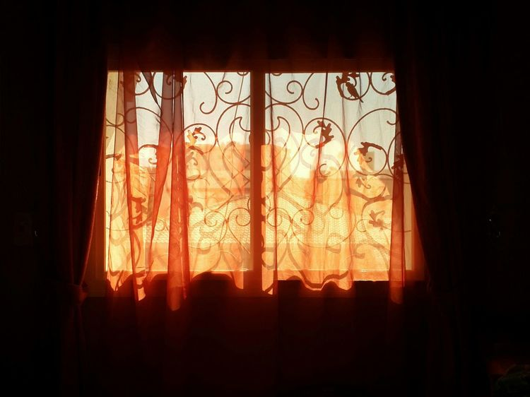 The Defiance. Window Silhouette Light And Shadow Window Light Orange Curtains Bird Window Sill Rooftop Home Is Where The Art Is