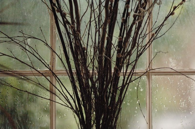 #pussywillow #branches in front of #Georgian #sashwindow #Peckham #London Branches StillLife Eye4photography  Window No People Mothernature Indoor Photography Tree Nature Indoors  Windowlight Daylight Green Green Color Rain Luminouslight Tree_collection  Plant London Lifestyle Nopeople Mother Nature Colours Of Nature Colour