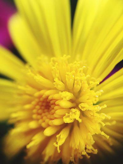 Macro .. fleur d'océan