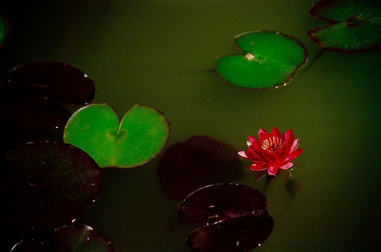 Beautiful stock photos of river, Beauty In Nature, Day, Flower, Growth