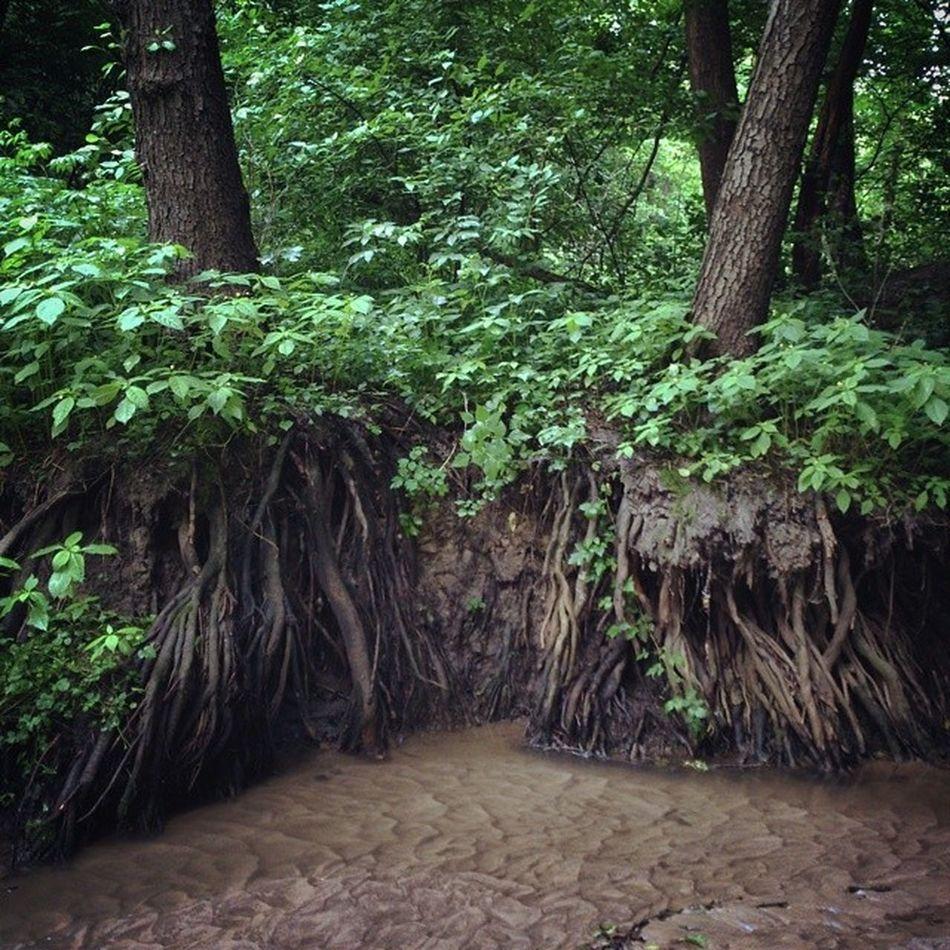 Даже стоя по щиколотку в говне, Вселенная дает шанс увидеть что-то симпатичное. Было бы желание сырец Киев город Syrets forest forest_trip лес дневник_наблюдателя kiev insta_kiev kievblog thekievblog wowkiev kievgram природа nature болото swamp