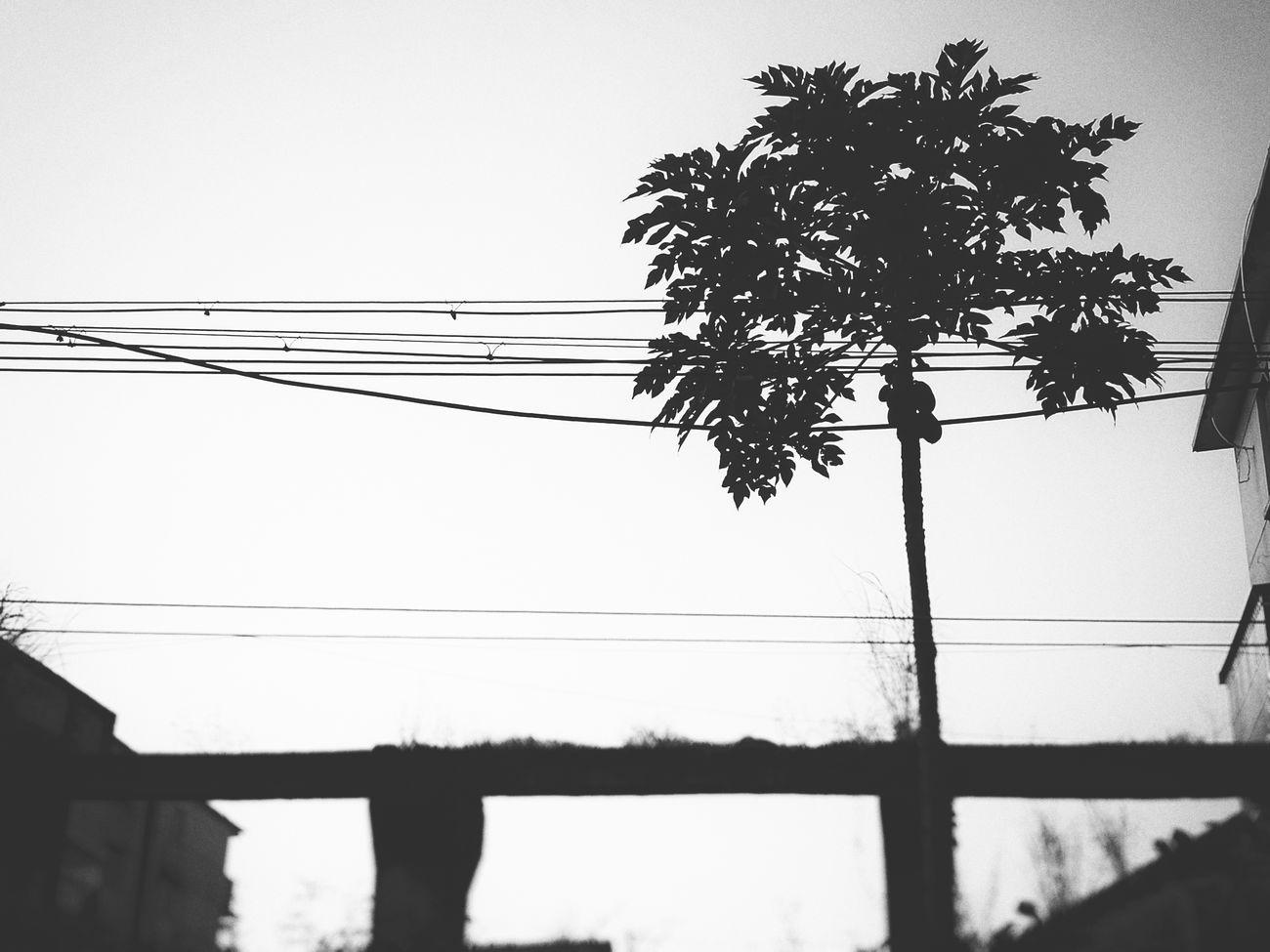 The Roadside Tree