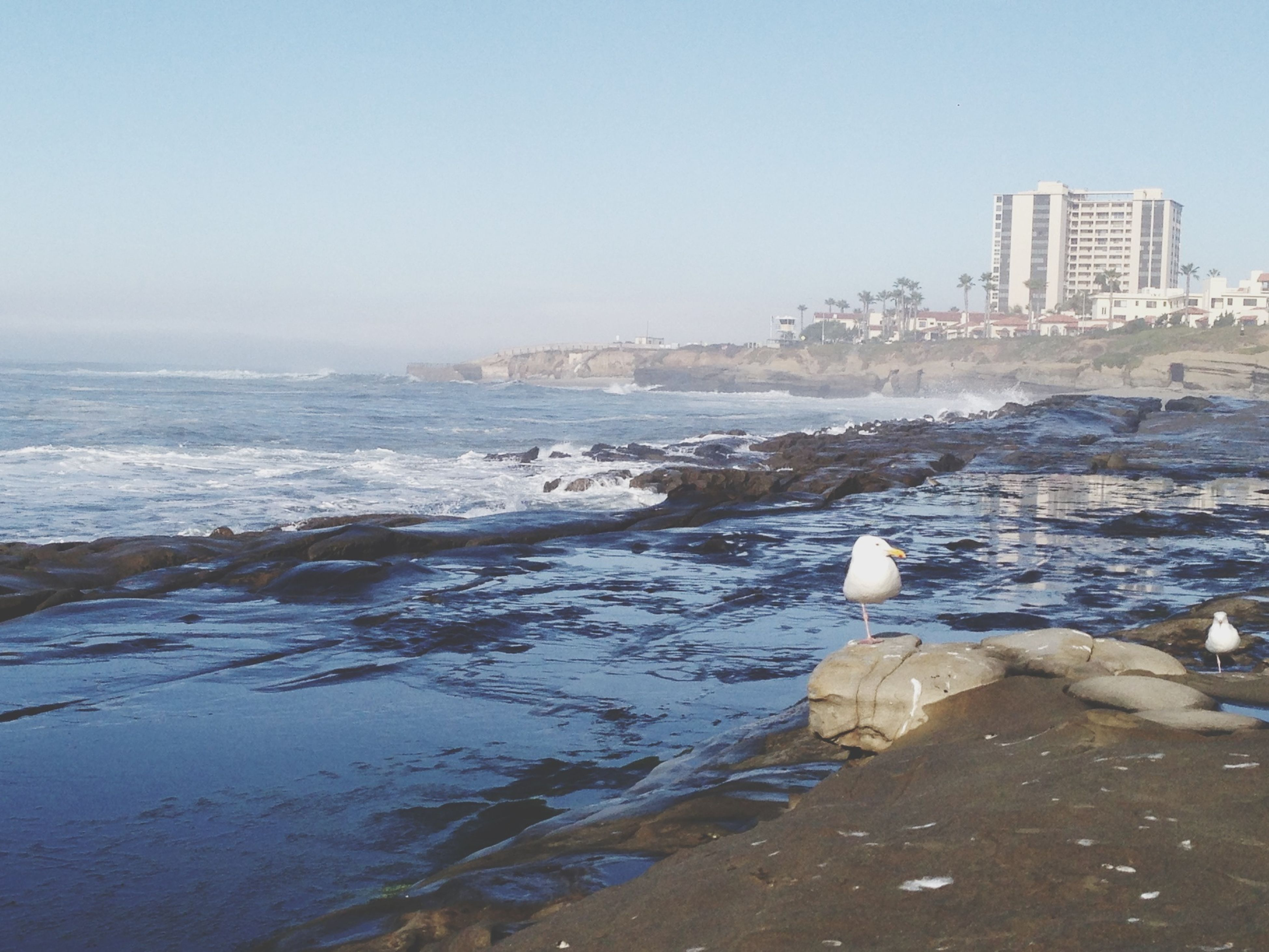 water, sea, clear sky, bird, copy space, beach, shore, tranquility, scenics, tranquil scene, nature, beauty in nature, rock - object, animal themes, seagull, sky, one animal, animals in the wild, horizon over water, day
