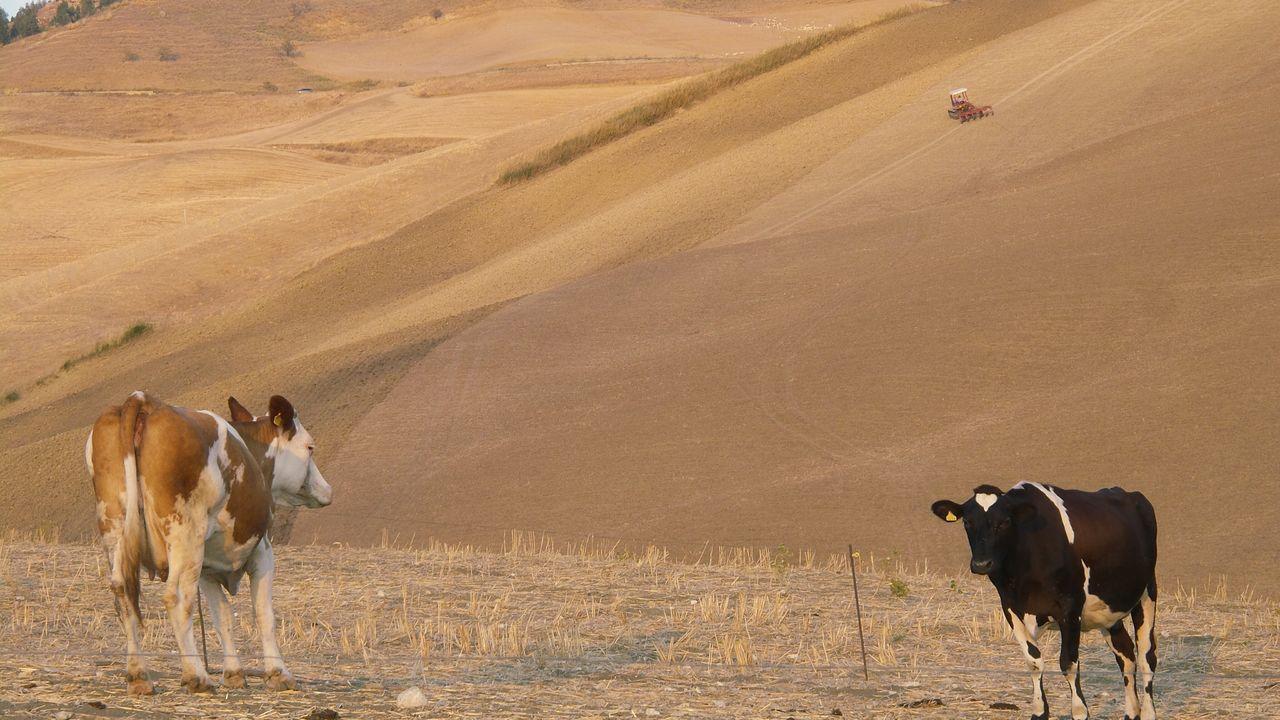 Desert Domestic Animals Landscape Arid Climate Animal Themes Mammal Livestock Sand Sunlight Sand Dune Working Animal Outdoors Shadow Rural Scene Herd Safari Animals Nature No People Scenics Large Group Of Animals