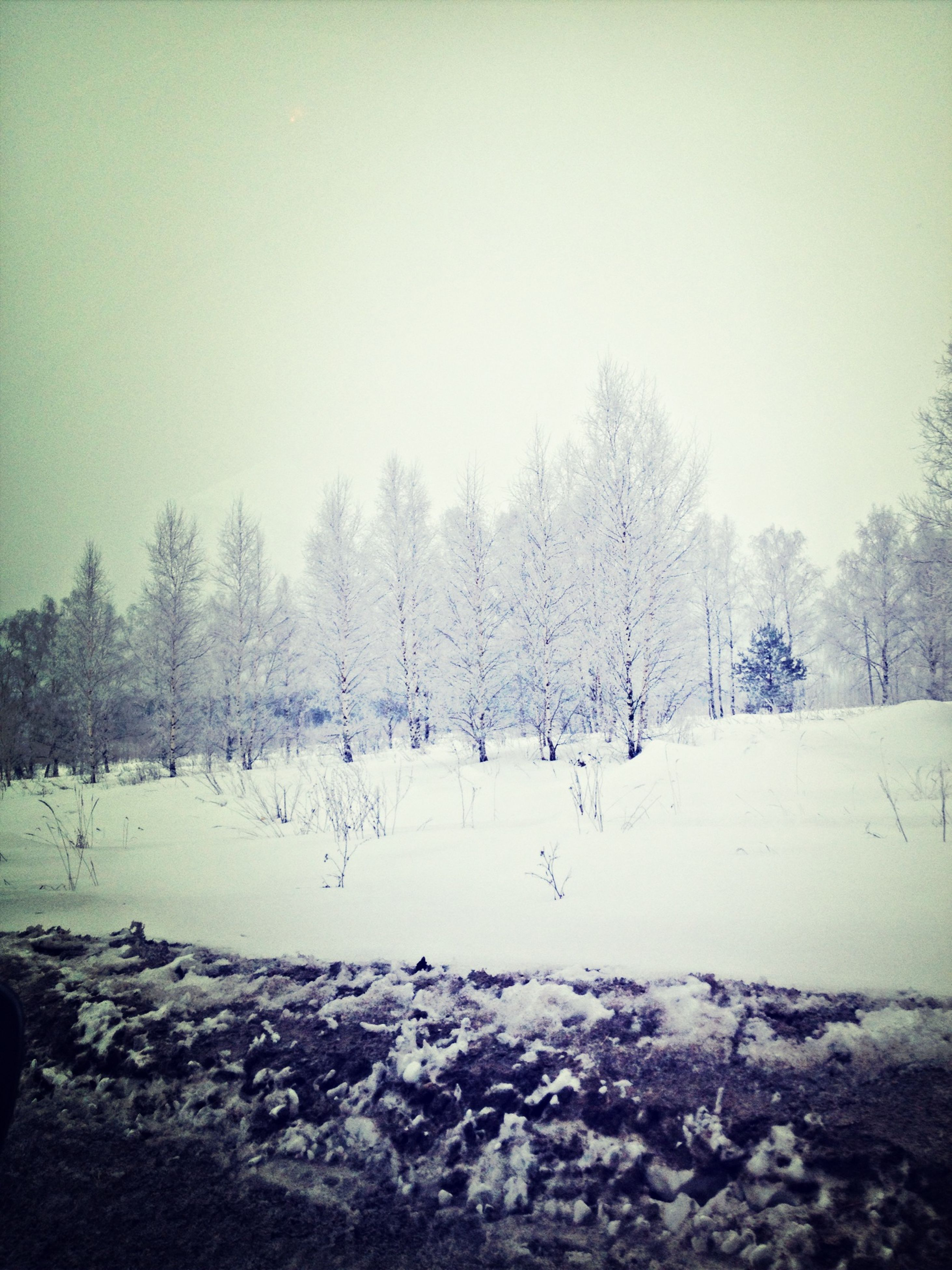 winter, snow, cold temperature, tree, season, weather, clear sky, landscape, field, tranquil scene, nature, copy space, bare tree, tranquility, covering, beauty in nature, white color, scenics, day
