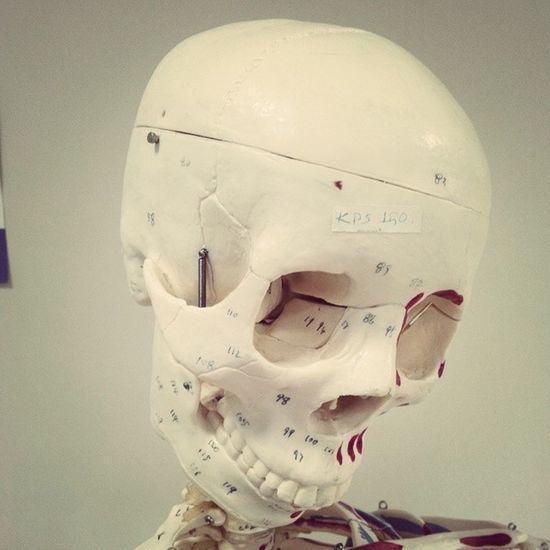 :))) Utangaç Utandı Kemik Iskelet