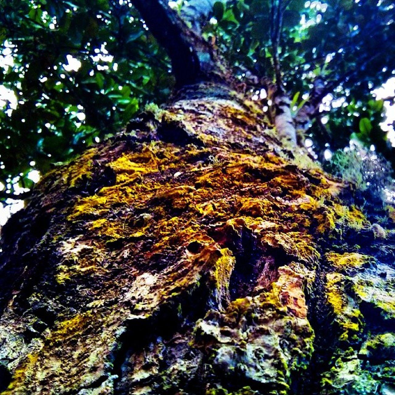 Tree! HDR