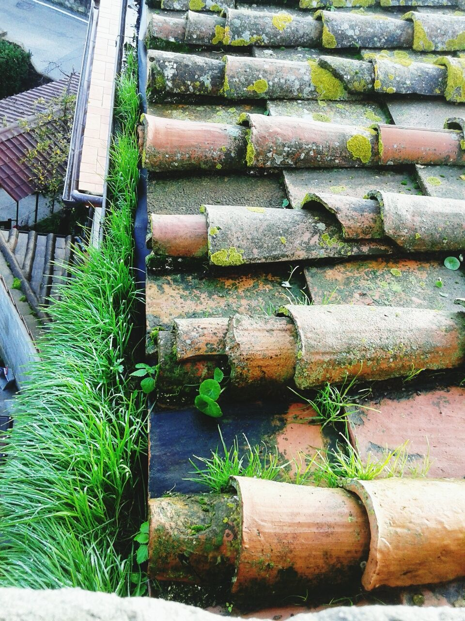 day, outdoors, no people, high angle view, steps, architecture, close-up, nature