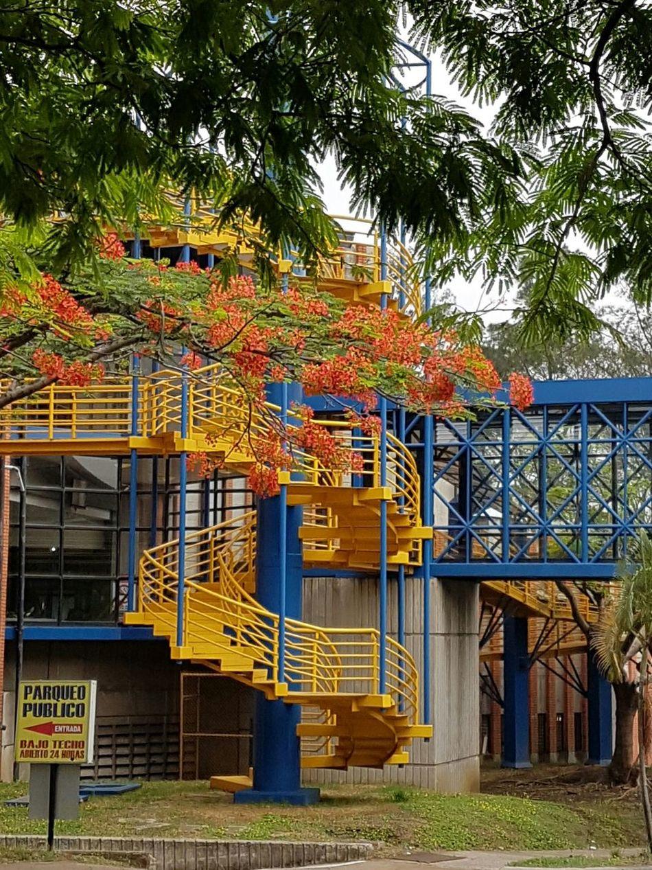 Colorfull colorido puente bridge, tropical alegre happy First Eyeem Photo Colorful Flowers Spring Costa Rica