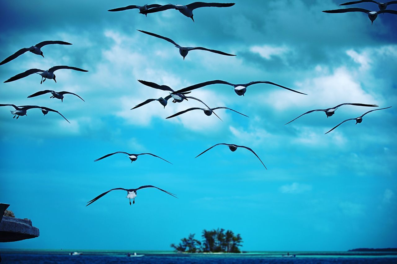 The gift of wings for flights to distant shores... Flying Large Group Of Animals Animal Themes Flock Of Birds Wildlife Nature Sky Mid-air Spread Wings Outdoors Water Cloud - Sky No People Animal Wildlife Sea Color Photography Tropical Paradise The Bahamas Bimini Beauty In Nature Photographyisthemuse Travel Photography Nature Photography Blue Sky Desert Island