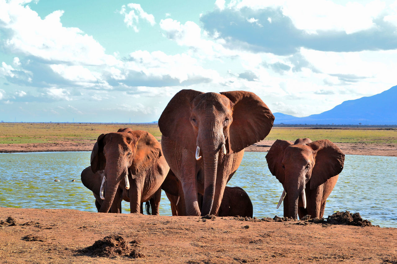 Beautiful stock photos of elephant, Animal Themes, Animals In The Wild, Cloud, Day