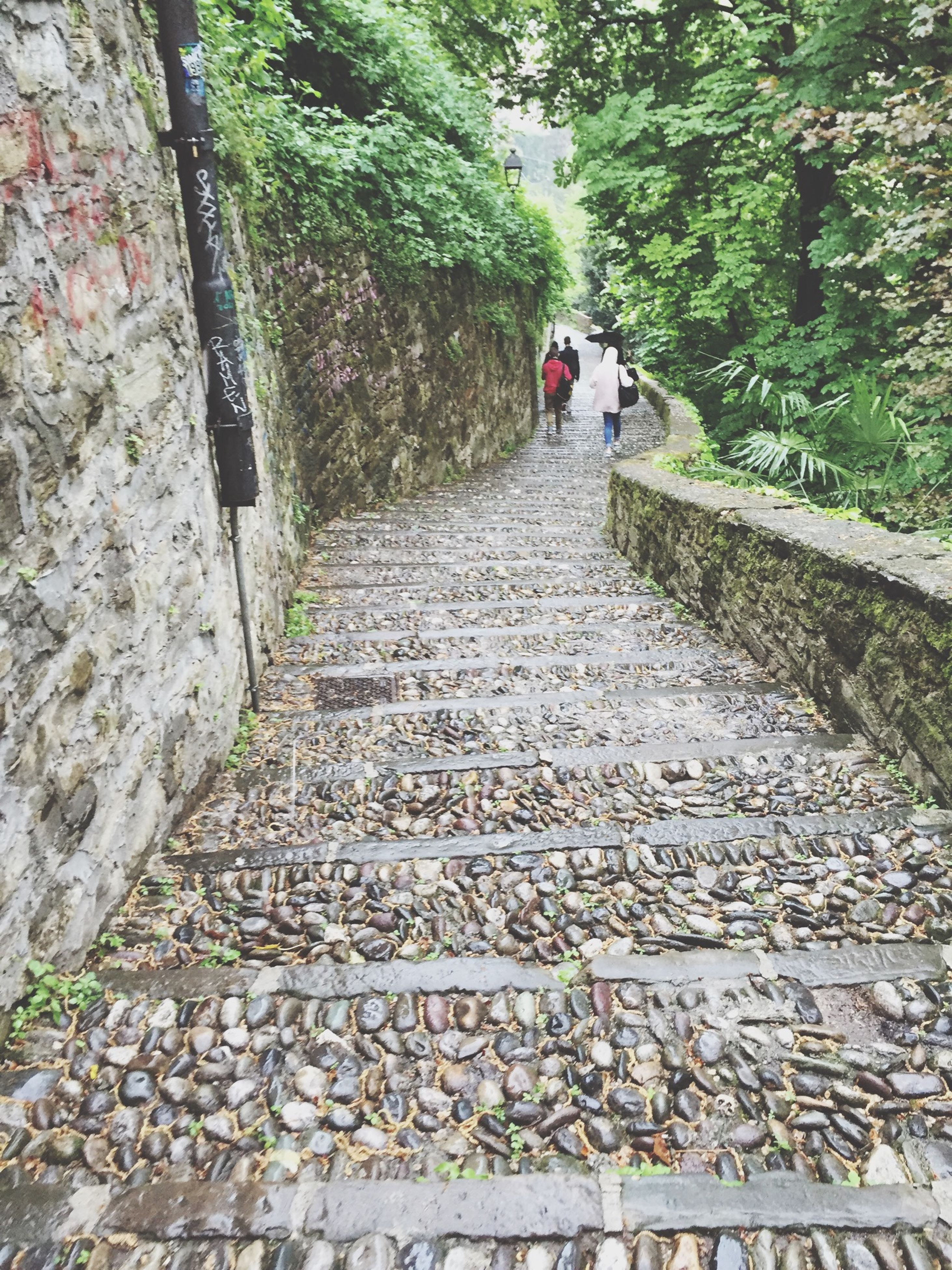 the way forward, steps, diminishing perspective, tree, steps and staircases, walking, vanishing point, footpath, lifestyles, men, walkway, leisure activity, person, day, pathway, rear view, outdoors, staircase