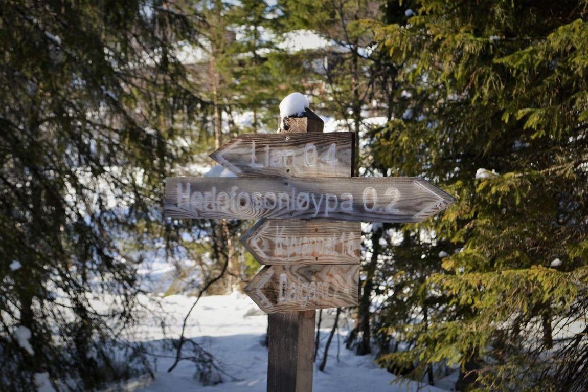 Winter Post Directions Wooden Post Destiny Trondheim Lian Snow Forest