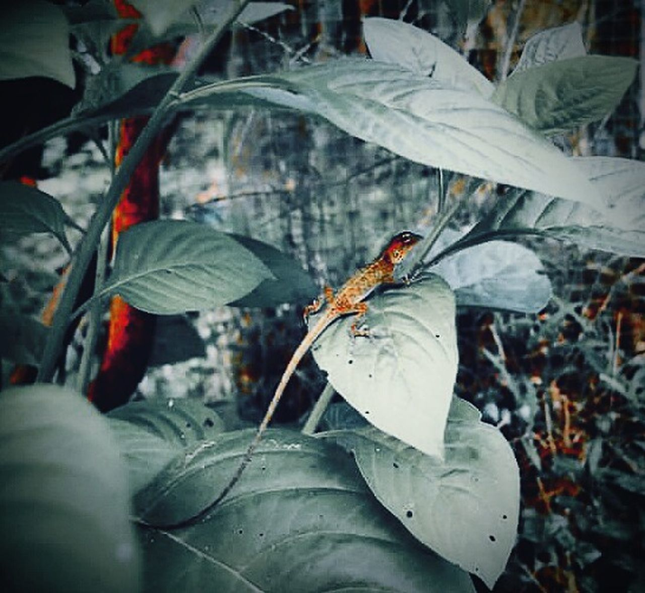 Hide and seek Reptile Gecko Lizard Hiding Leaves Plants And Garden Mobile Photography Fresh On Eyeem  The Week Of Eyeem My Capture  Hello World EyeEm Nature Lover The Beauty Of Nature EyeEm Malaysia Colour Of Nature Garden Photography Green Color Eyeem Garden Showcase June