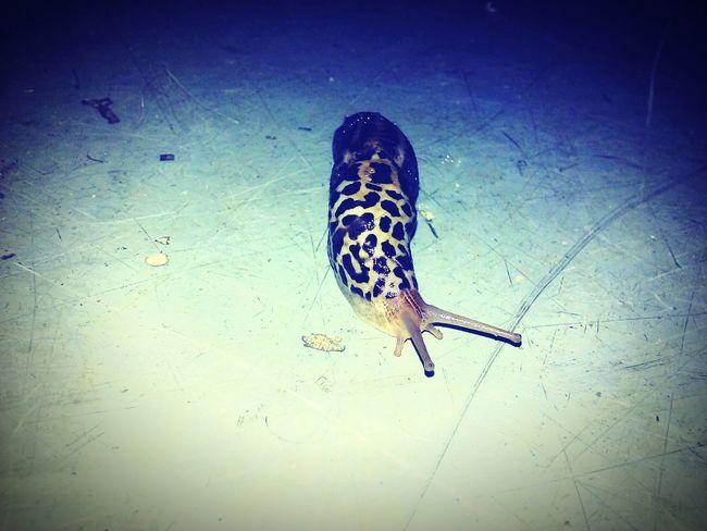 Slug Bug Slugs! Slow Life