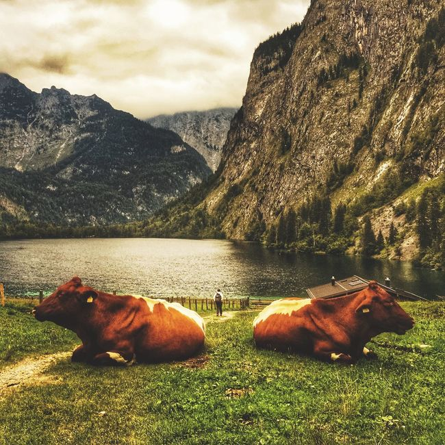The Moment / recently at Königssee Hanging Out EyeEm Best Shots Traveling Capture The Moment Cheese! Check This Out Landscape Nature EyeEm Nature Lover Love Without Boundaries Seeing The Sights Whatever It Takes