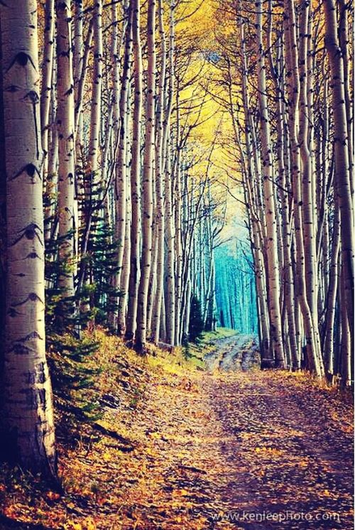 Wow!! Beautiful ♥ Amazing View A Walk In The Woods