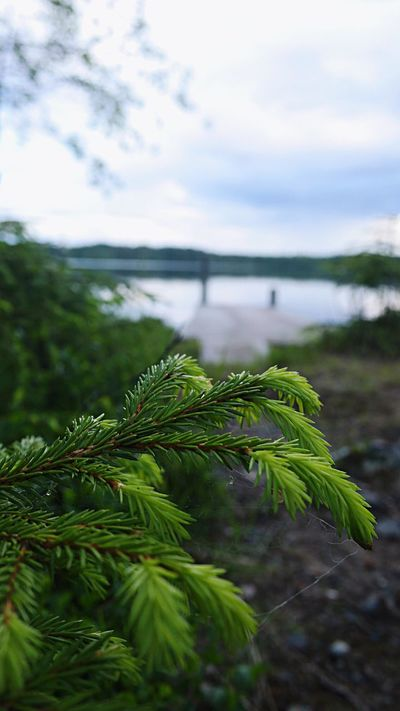 🌲 Nature Growth Tree Water Beauty In Nature Tranquility No People Green Color Outdoors Plant Sky Close-up Scenics Branch Day Lake Pier Finland Finding New Frontiers EyeEmNewHere Adapted To The City