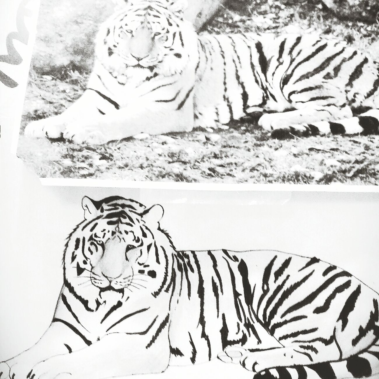 Art Art, Drawing, Creativity Tiger Animals