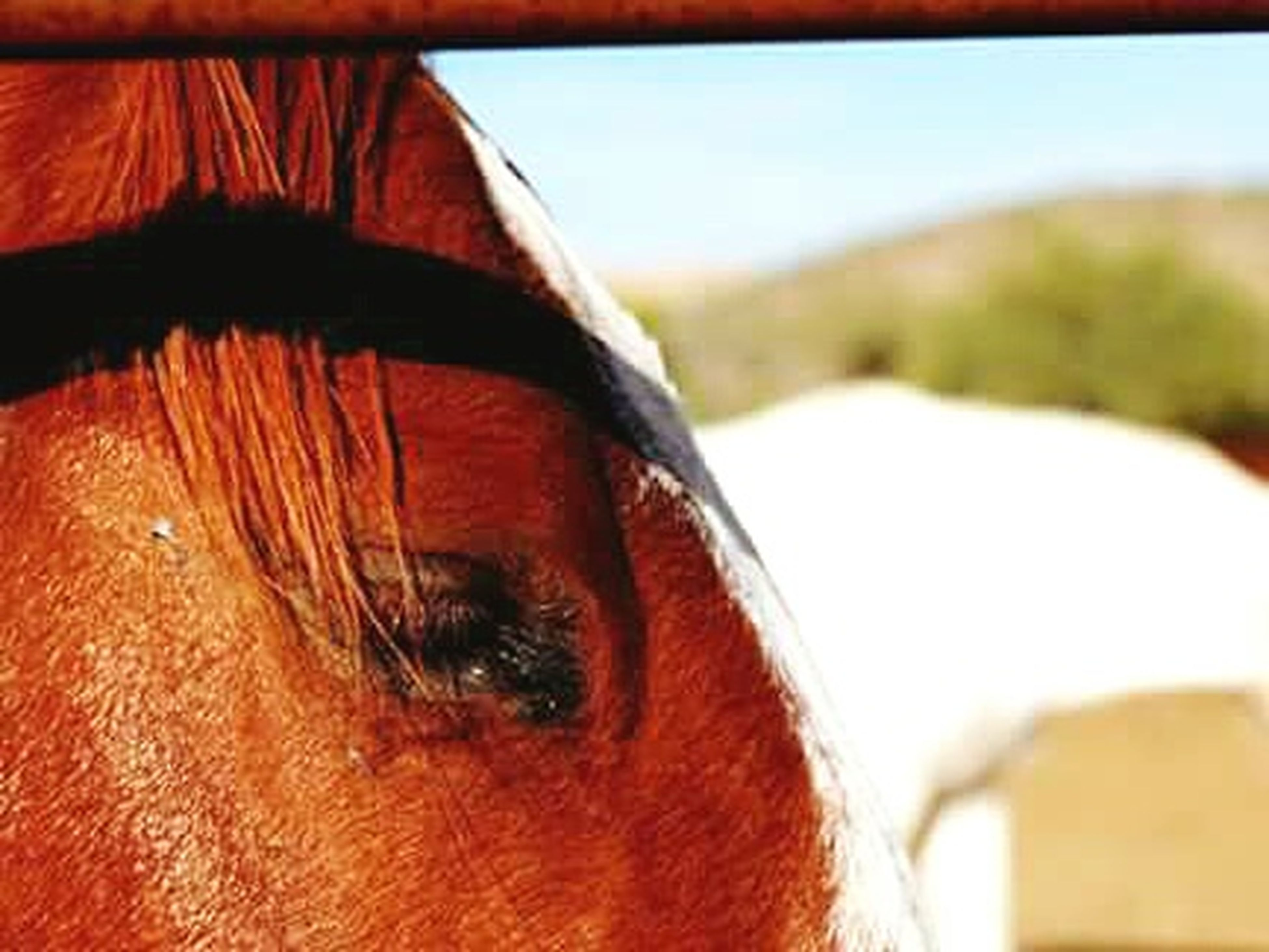close-up, focus on foreground, brown, part of, cropped, detail, animal head, horse, selective focus, sky, day, no people, animal body part, indoors, sunlight, extreme close up, auto post production filter, nature, desert