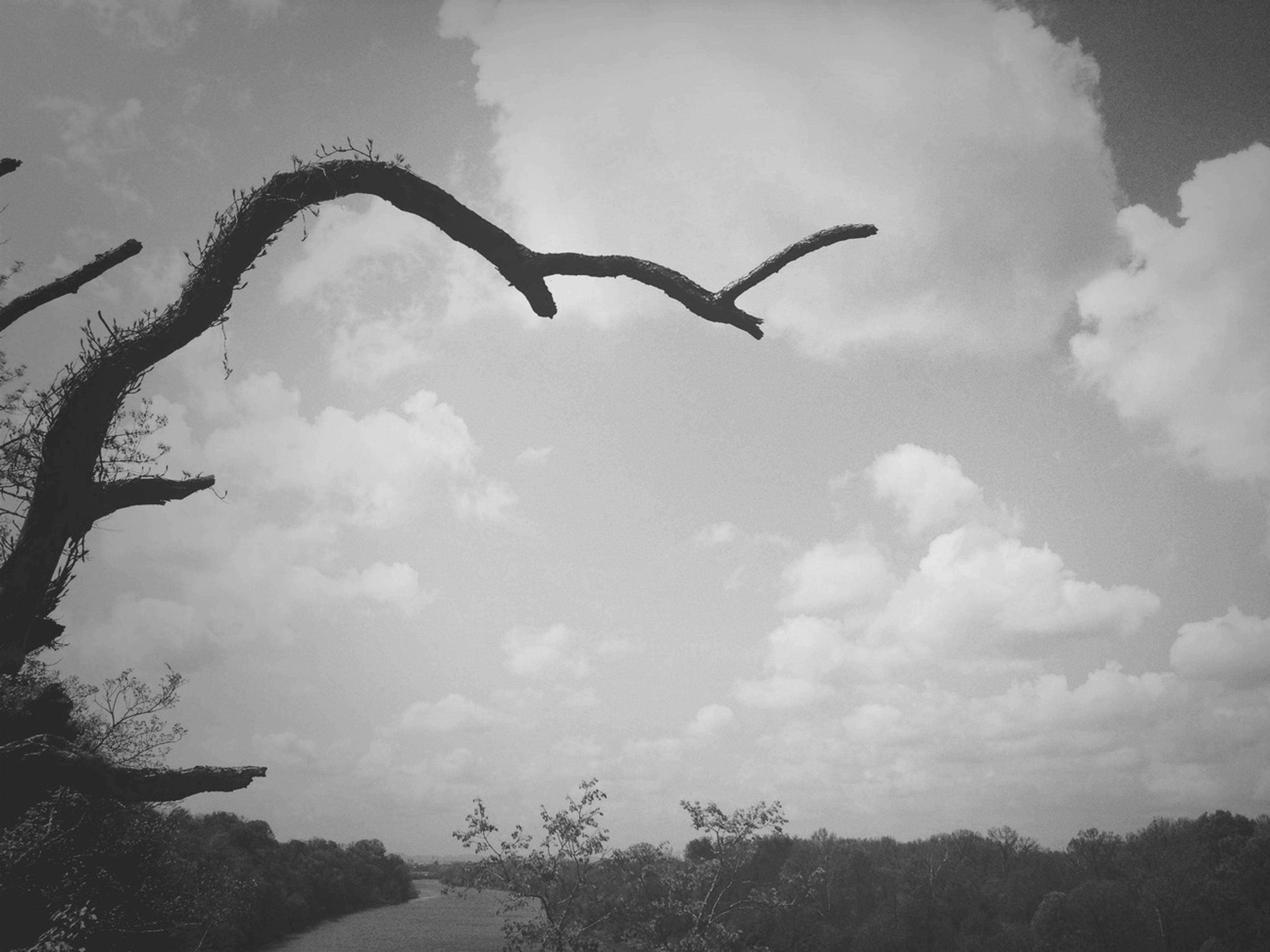 sky, cloud - sky, low angle view, tree, cloudy, bird, cloud, nature, tranquility, flying, beauty in nature, tranquil scene, scenics, silhouette, animal themes, day, outdoors, mid-air, animals in the wild, no people