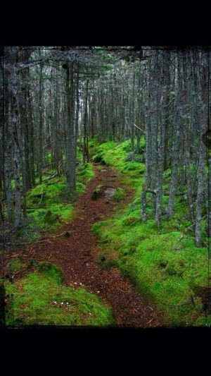 Something Green Friday a hiking path on my griends property in Nova Scotia Green Hiking Beautiful