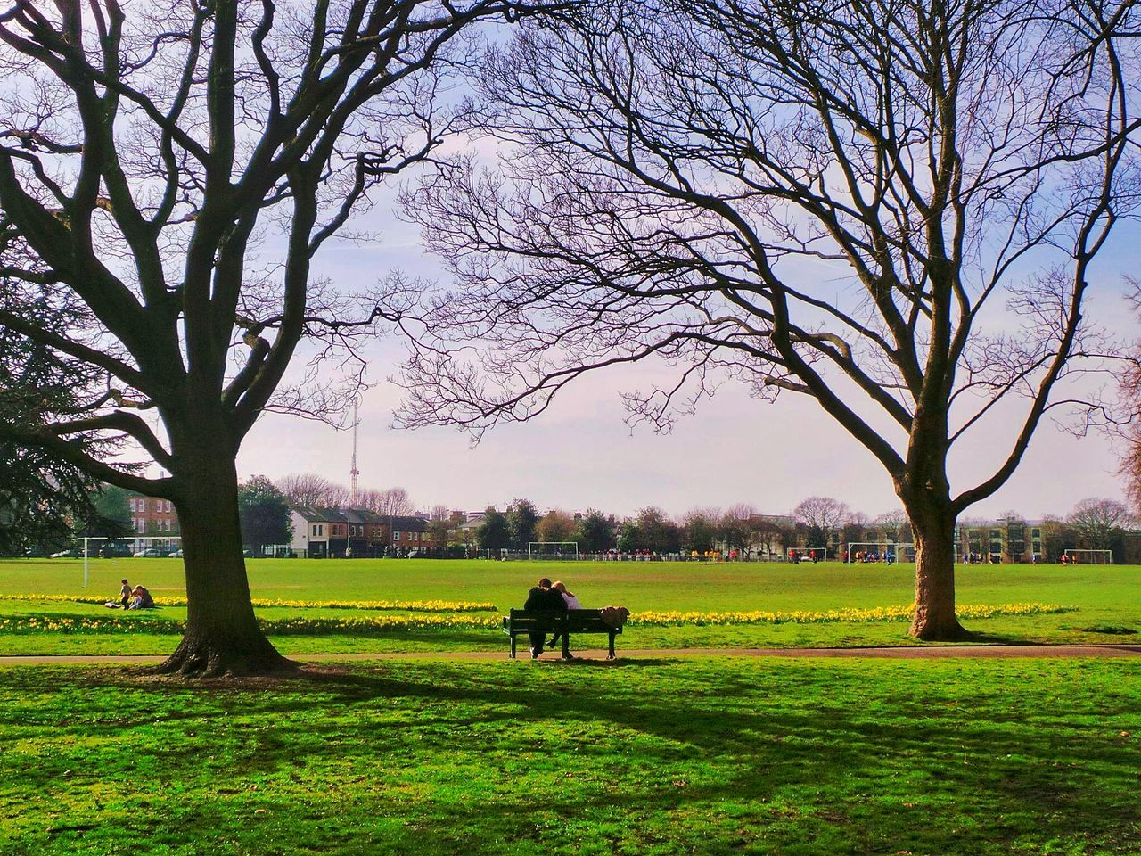 Beautiful stock photos of park, Bare Tree, Bench, City, City Life