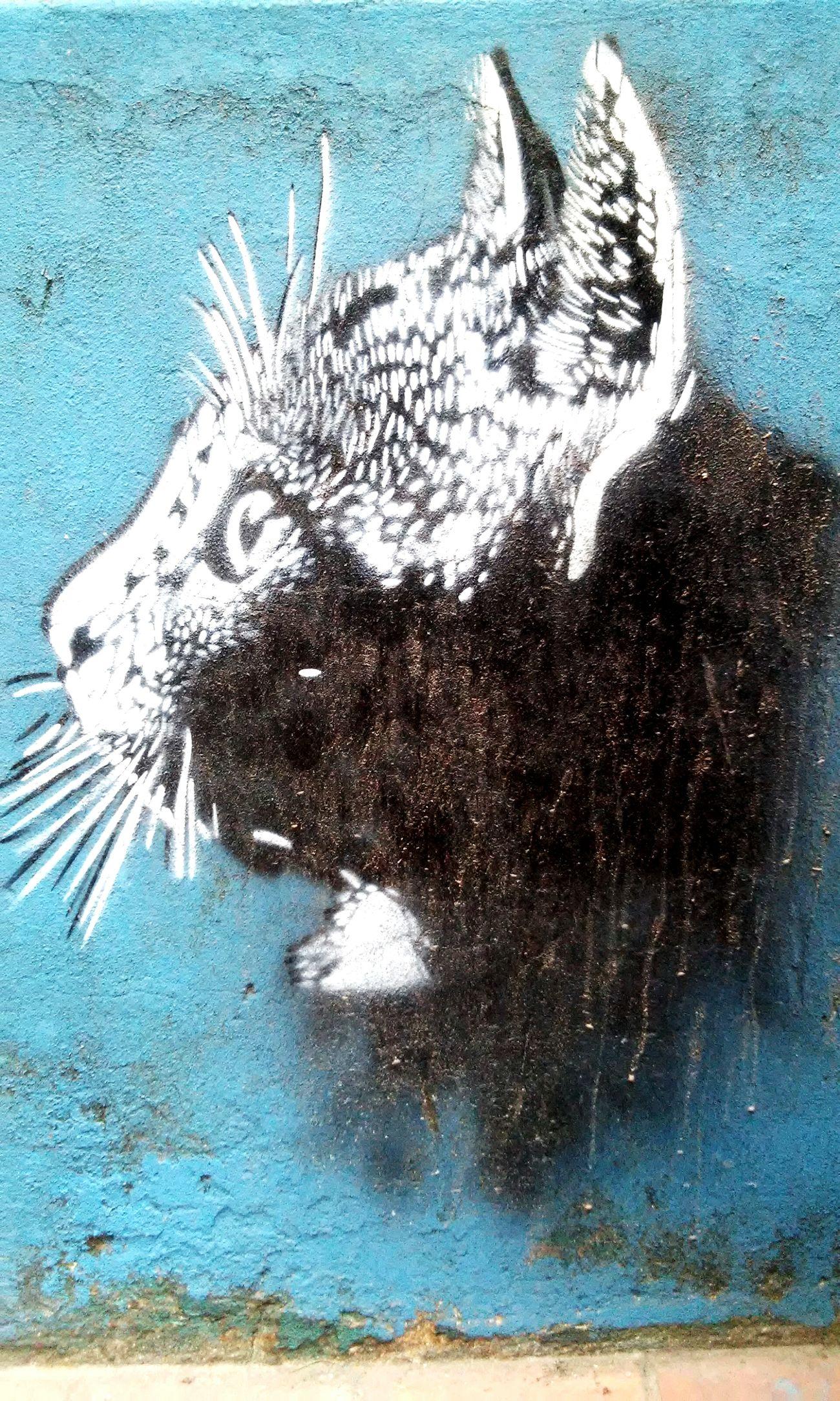 Catsgram Graffiti Stencil Art Impa