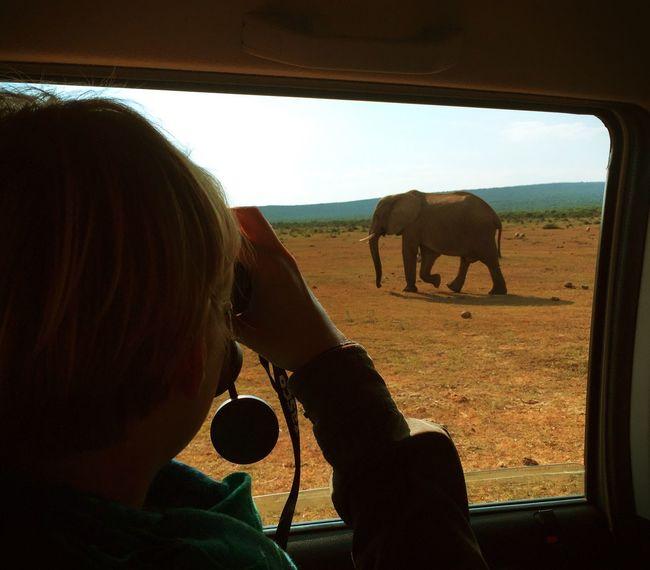 TheElephant: South Africa Nature Travelling Elephant Open Edit Safari Enjoying The View Wildlife Tadaa Community Pure Beauty WOW Animals