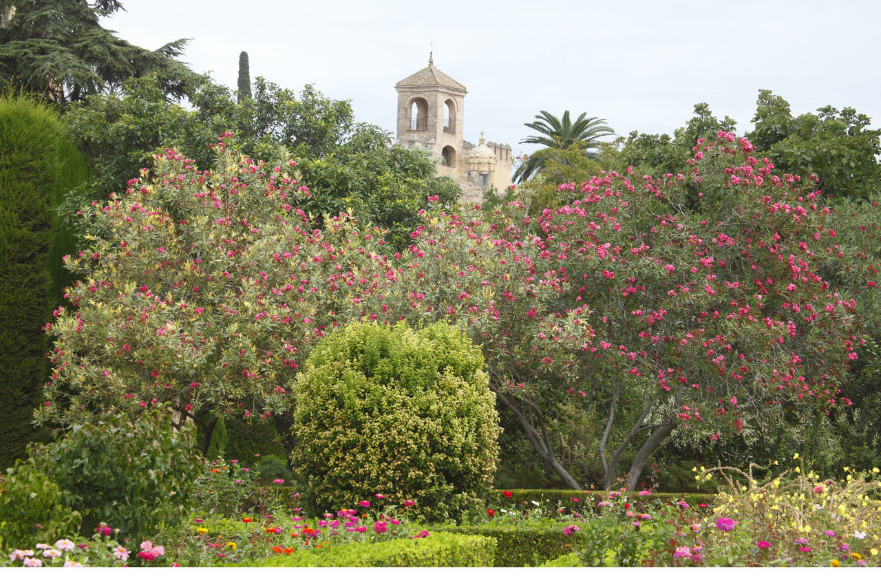 Garten of Alcazar, Cordoba, Andalusien, Spanien Alcazar Andalucía Andalusia Architecture Beauty In Nature Building Exterior Built Structure Córdoba D Day Flower Garden Green Color Growth Nature No People Ornamental Garden Outdoors Plant Sky SPAIN Tree