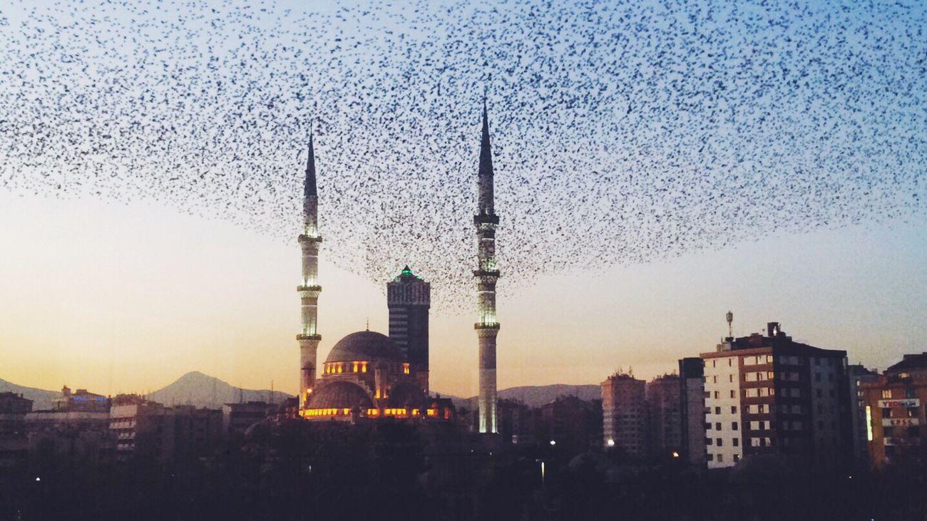 🕌 Birds Kuşlaruçuyor Kuşlar 🐦 Gocmenkuslar Konya Konyagram Konya Turkey Kültür Park Uniqueness