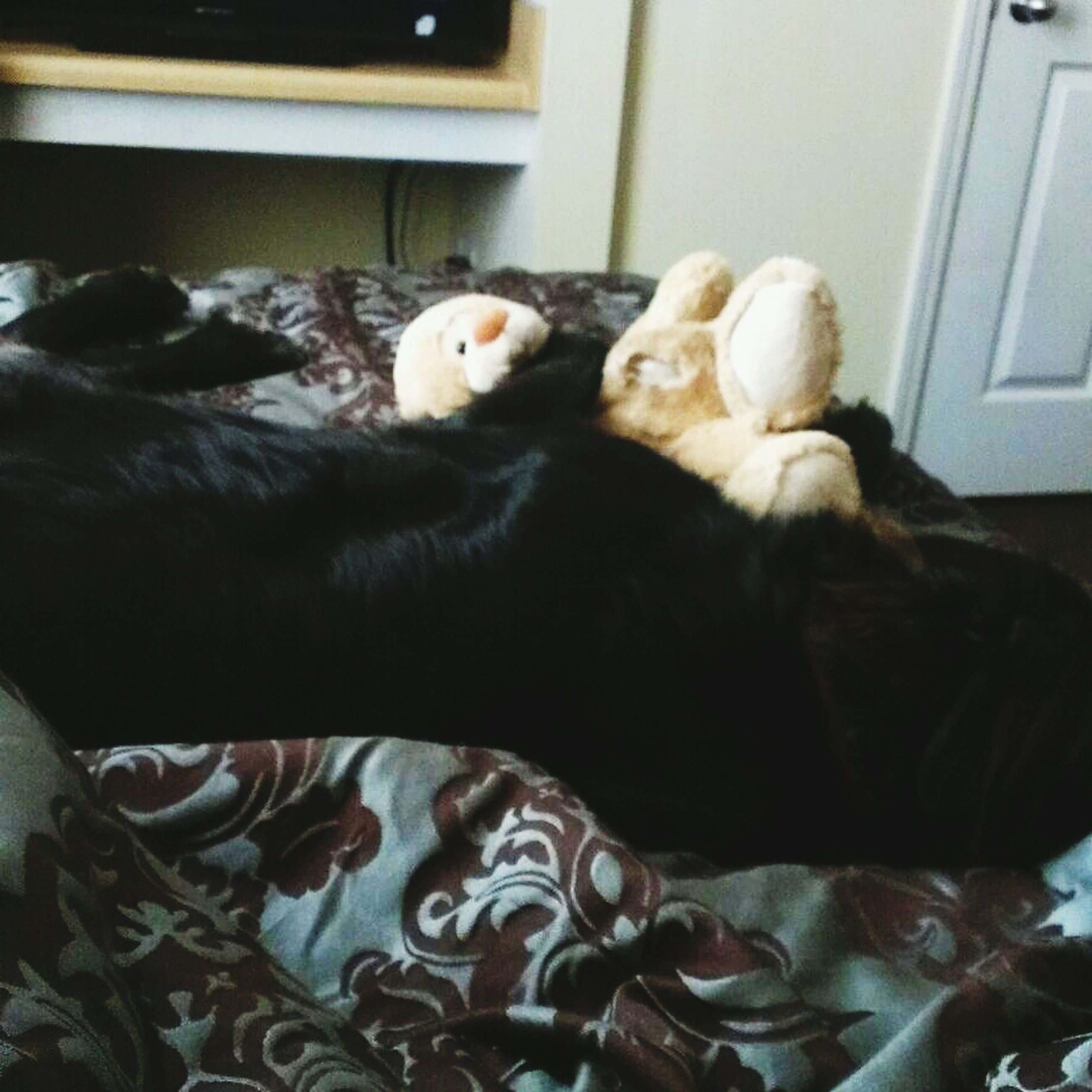 indoors, domestic animals, pets, animal themes, mammal, one animal, relaxation, home interior, bed, resting, sleeping, domestic cat, lying down, cat, sofa, bedroom, dog, home, pillow, comfortable