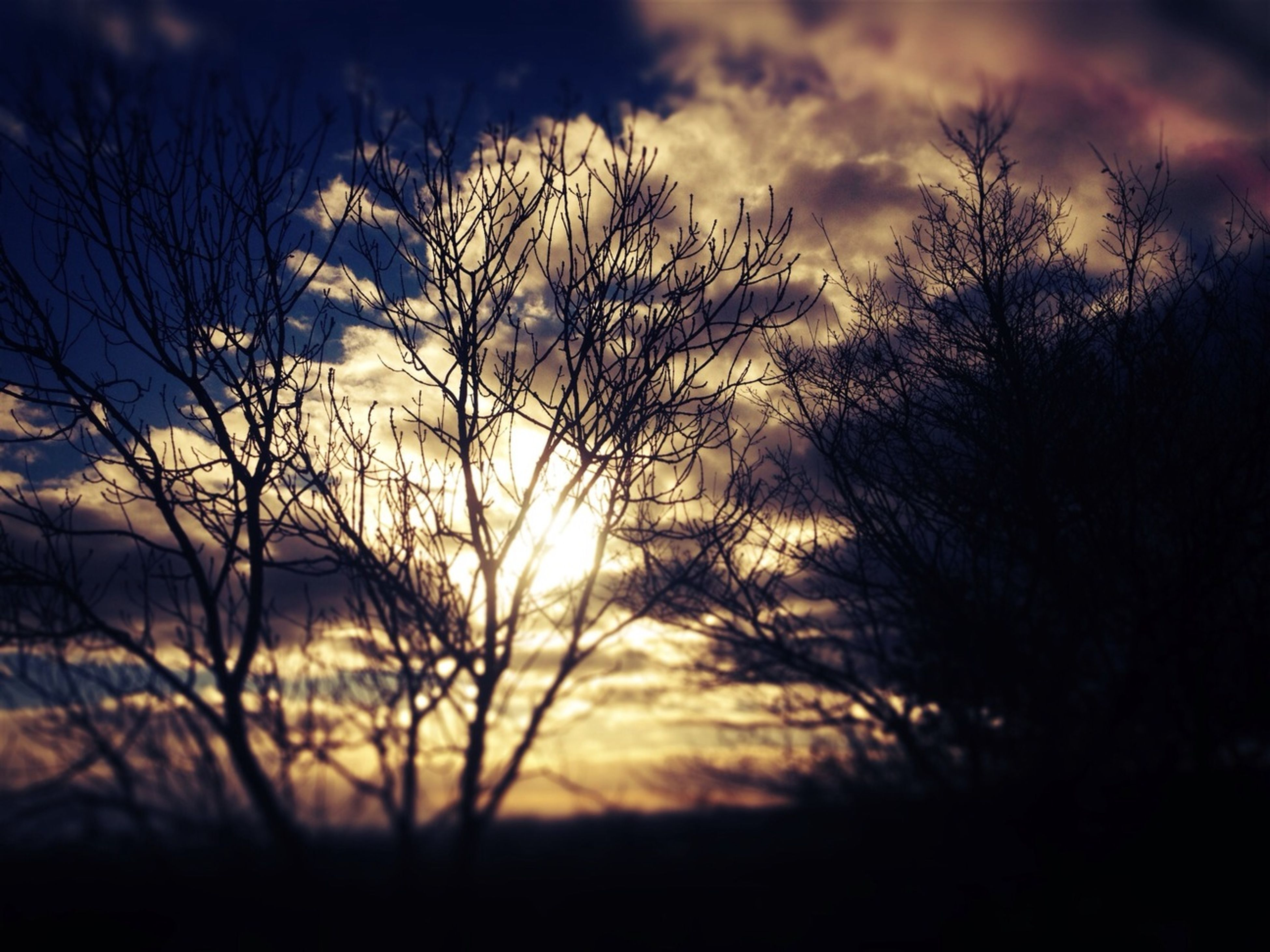 sunset, silhouette, bare tree, sky, tranquility, cloud - sky, tranquil scene, beauty in nature, scenics, branch, nature, sun, tree, cloud, dramatic sky, dusk, dark, cloudy, low angle view, idyllic
