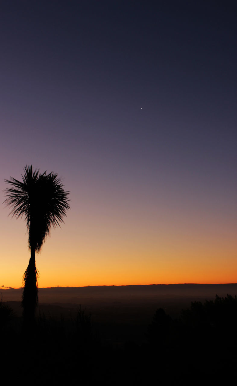 sunset, silhouette, nature, beauty in nature, tranquil scene, tranquility, scenics, tree, growth, copy space, no people, landscape, sky, clear sky, outdoors, field, palm tree