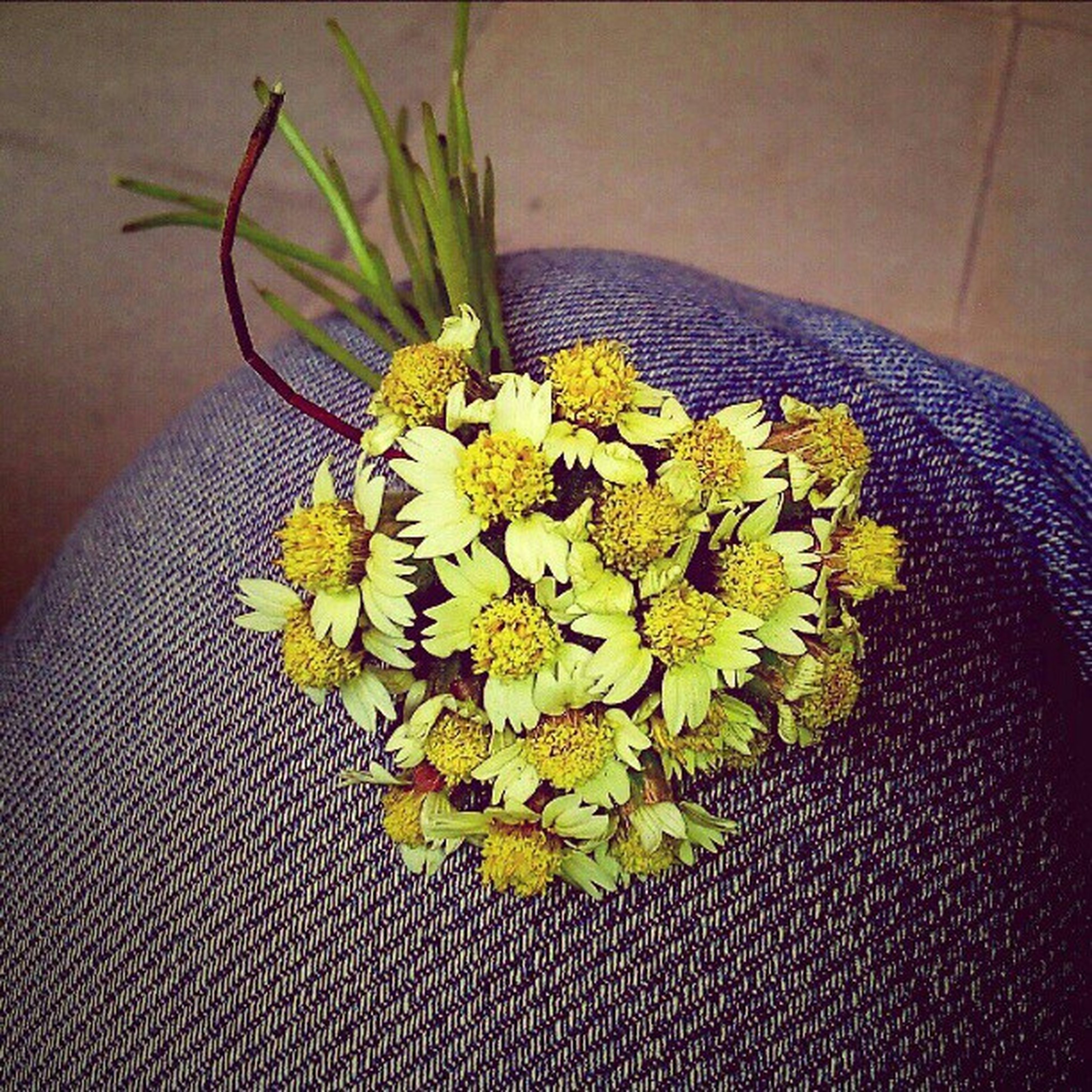 flower, indoors, high angle view, freshness, fragility, one animal, leaf, close-up, plant, animal themes, table, insect, petal, potted plant, nature, yellow, vase, no people, beauty in nature, flower head